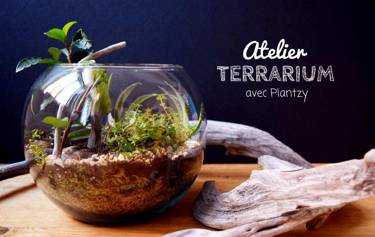 atelier terrarium avec plantzy rue de l 39 industrie rue de l 39 industrie. Black Bedroom Furniture Sets. Home Design Ideas