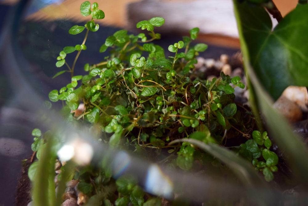 ruedelindustrie plantzy_hexline_terrarium