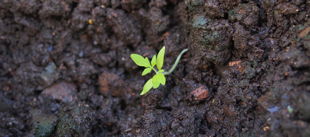 ruedelindustrie_compost_terre